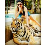 sushmita sen in tiger kingdom thailand