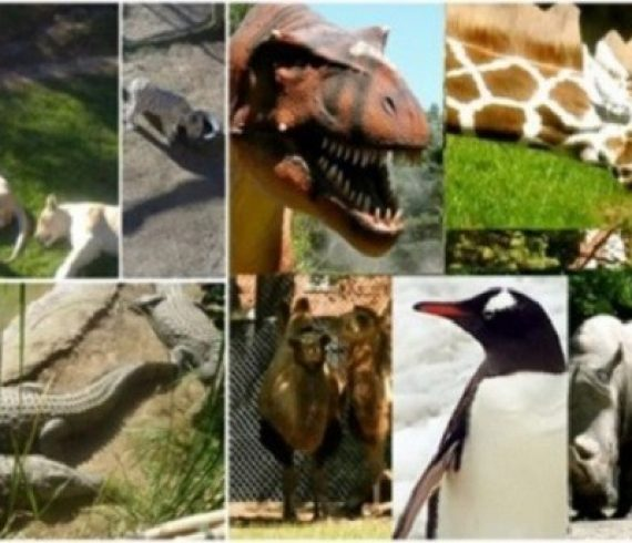 Best zoo's in the world