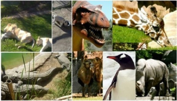 Top most popular zoos in India for watching wild animals